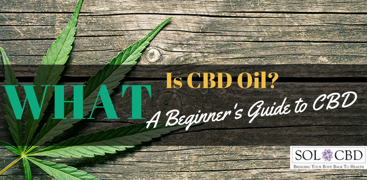 What Is CBD Oil? A Beginner's Guide to Cannabidiol