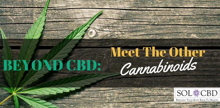 Beyond CBD and THC: Meet the Other Cannabinoids