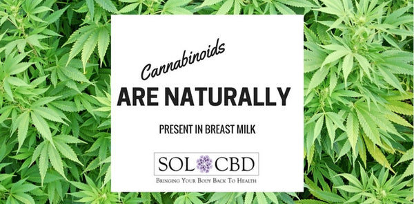 Cannabinoids Are Naturally Present In Breast Milk