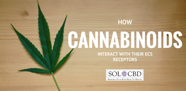 How Cannabinoids Interact with Their ECS Receptors