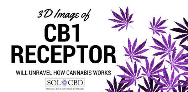 3D Image of CB1 Receptor Will Unravel How Cannabis Works