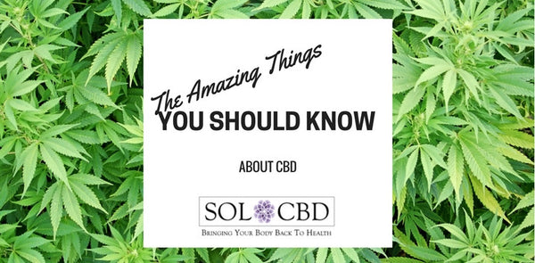 The Wonders of CBD: What You Should Know About The Amazing Compound