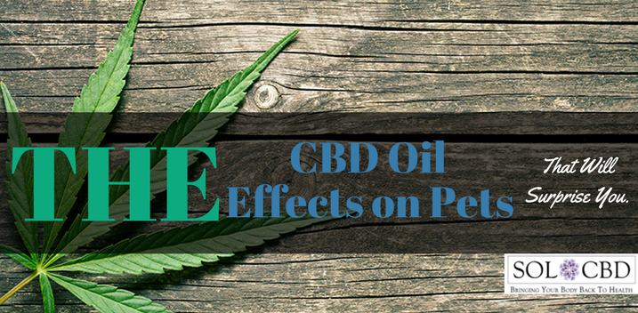 The CBD Oil Effects on Pets That Will Surprise You