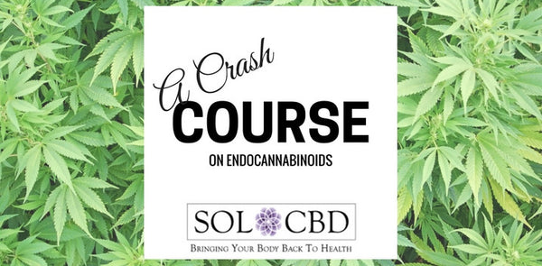 A Crash Course On Endocannabinoids