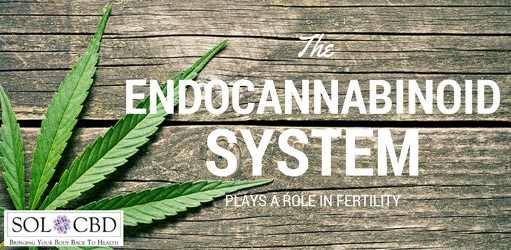 The Endocannabinoid System Plays a Role In Fertility