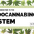 A Brief Introduction to the Endocannabinoid System