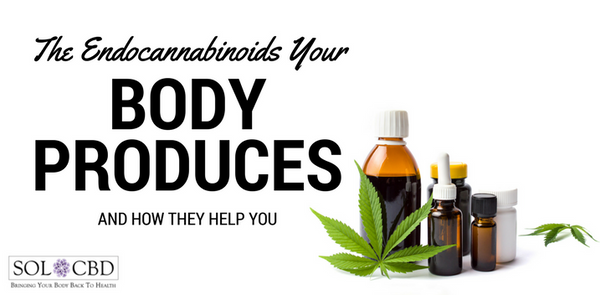 The Endocannabinoids Your Body Produces & How They Help You