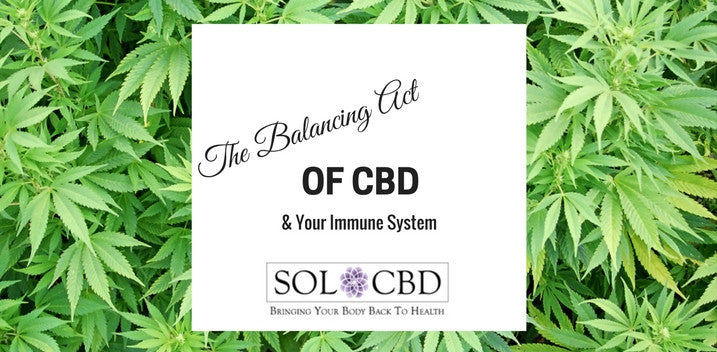 The Balancing Act of CBD & Your Immune System