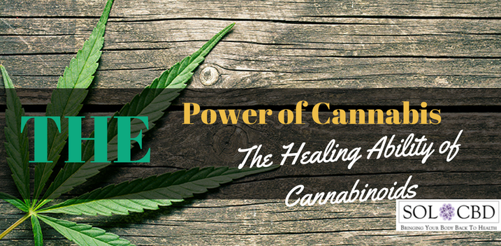 The Power of Cannabis: The Healing Ability of Cannabinoids