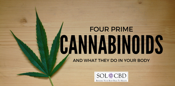 The 4 Prime Cannabinoids and How They Work in Your Body