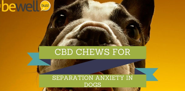 CBD Soft Chews to Ease Separation Anxiety in Dogs