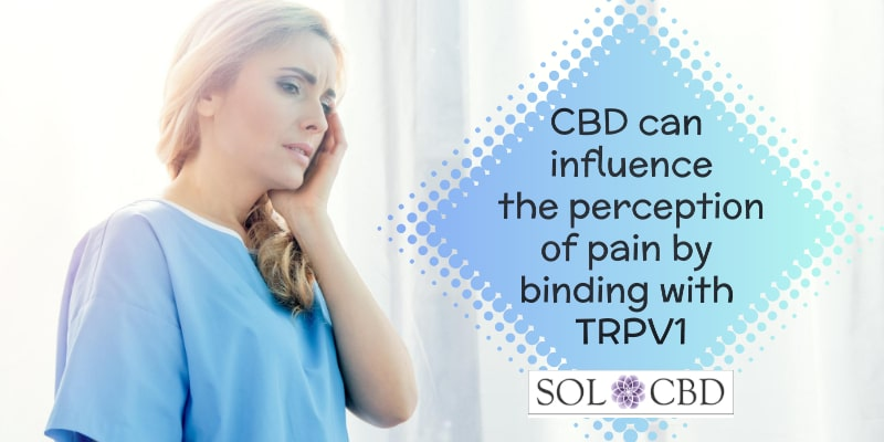 CBD can influence the perception of pain via this TRPV1 activity.