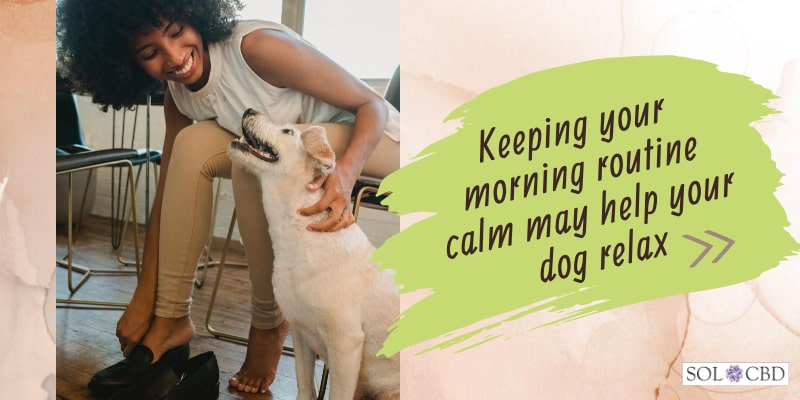 Aside from offering your pet a dog CBD supplement, you can help them with anxiety and stress in different ways as well.