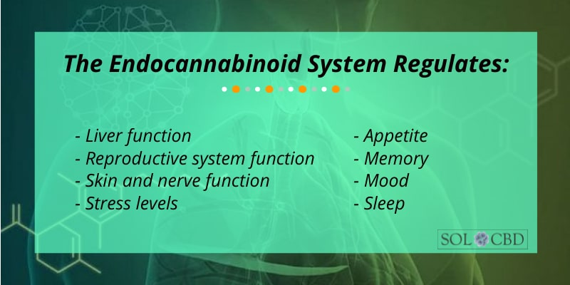 What happens when the endocannabinoid system can't seem to balance itself? Well, that's where CBD comes in.