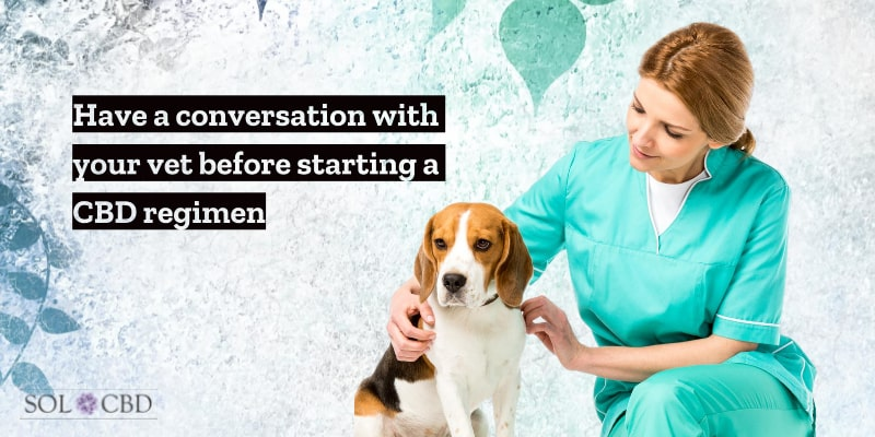 Have a conversation with your vet before starting a CBD oil regimen for your pet.