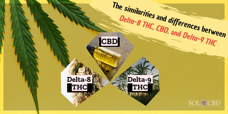 The similarities and differences between Delta-8 THC, CBD, and Delta-9 THC.