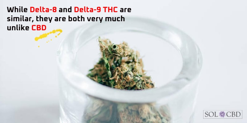 While Delta-8 and Delta-9 THC are similar, they are both very much unlike CBD.