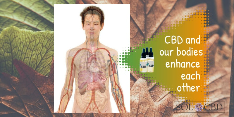 CBD and our bodies enhance each other.