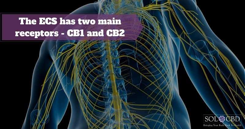 CBD appears to modulate the activity at these receptors.