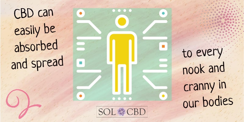 CBD can easily be absorbed and spread to every nook and cranny in our bodies.
