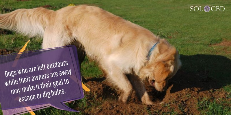 Dogs who are left outdoors while their owners are away may make it their goal to escape or dig holes.