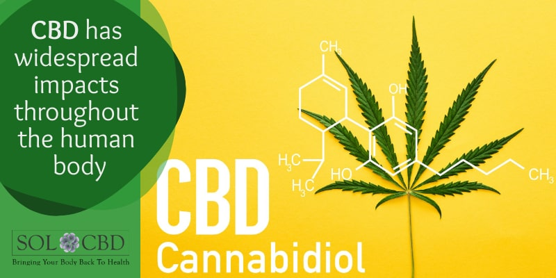 CBD has widespread effects throughout the human body.