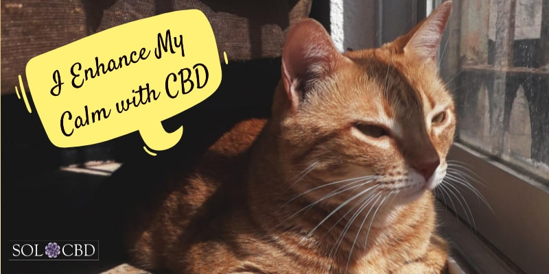 Pet owners often quickly see positive signs in their pets after taking CBD.