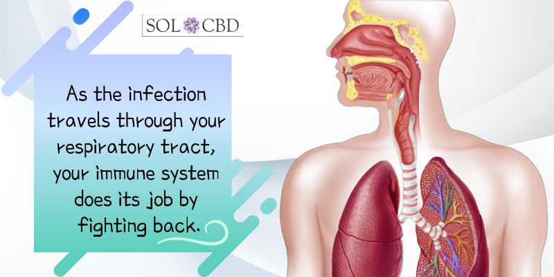 As the infection travels through your respiratory tract, your immune system does its job by fighting back.