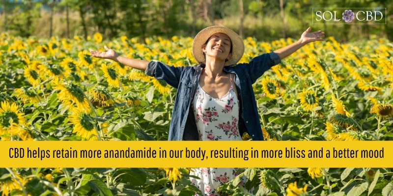 CBD helps retain more anandamide in our body, resulting in more bliss and a better mood.