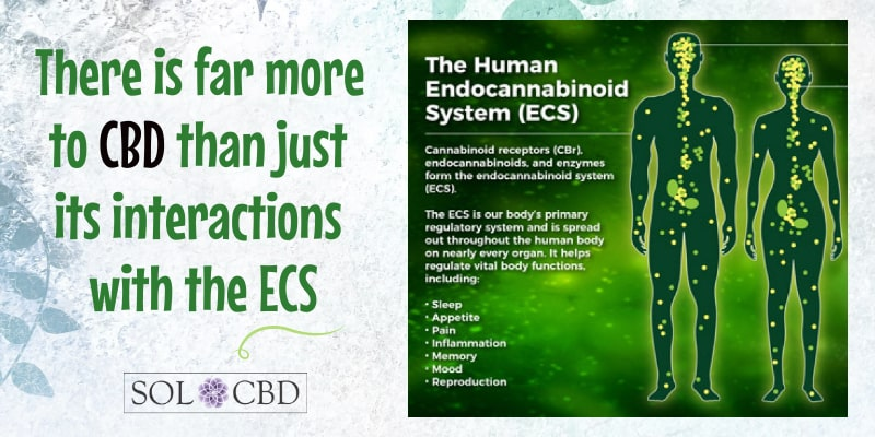 There is far more to CBD than just its interactions with the ECS
