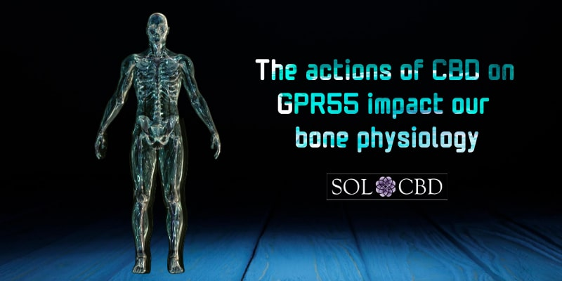 The actions of CBD on GPR55 impact our bone physiology.