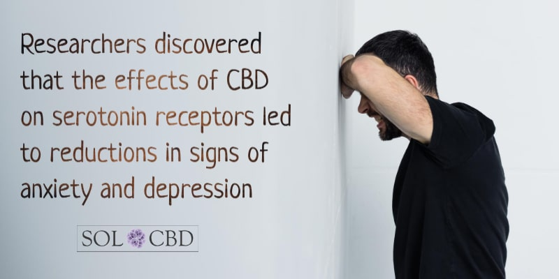 Researchers discovered that the effects of CBD on these serotonin receptors led to reductions in signs of anxiety and depression.