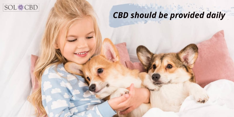 The best way you can ensure that your pet is getting the most out of CBD oil is by giving them a consistent daily dose.