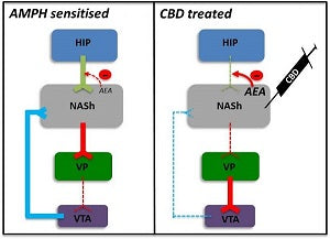 Antipsychotic Potential of Cannabidiol Revealed
