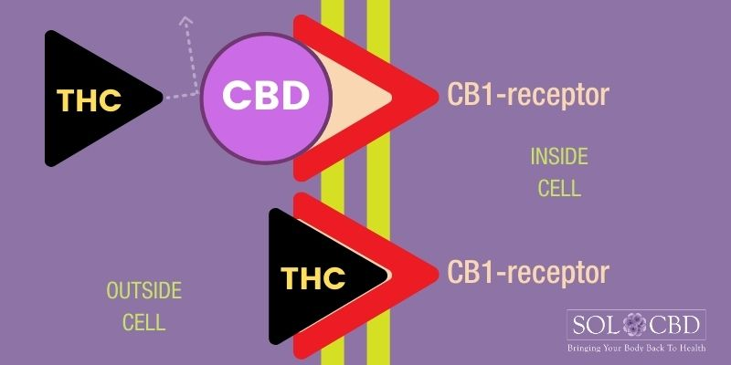 Instead of binding with the receptors, CBD influences your health through various physiological mechanisms.