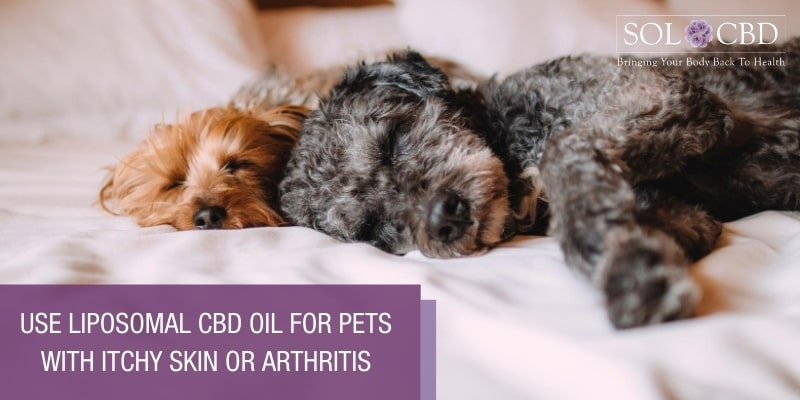 You can use Liposomal CBD Oil for pets with itchy skin or arthritis just like you can for humans.