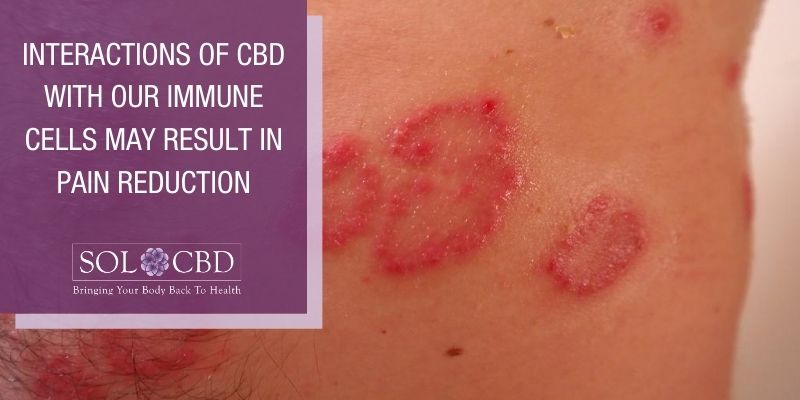 Reductions in pain may also result from the interactions of CBD with our immune cells.