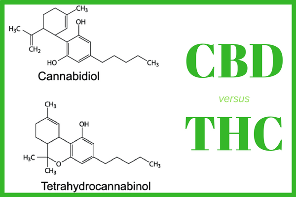 THC and CBD interact with the endocannabinoid system in very different ways.