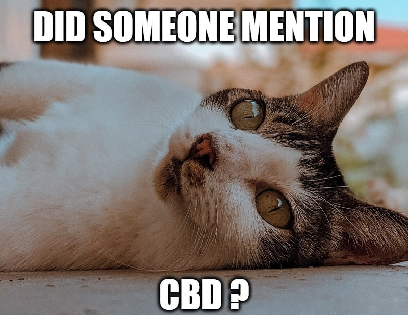 The CBD Craze