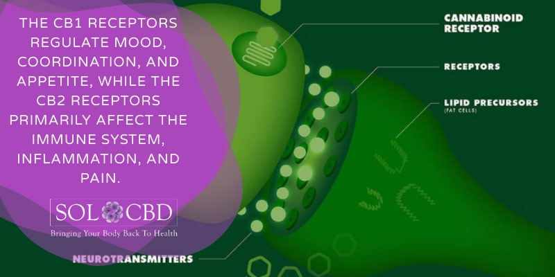 Both THC and CBD influence the brain receptors associated with pleasure, thinking, coordination, time perception, and memory in very different ways.