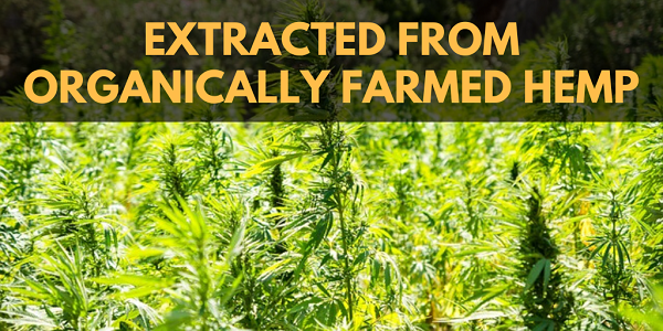 CBD should have been extracted from organically farmed hemp.