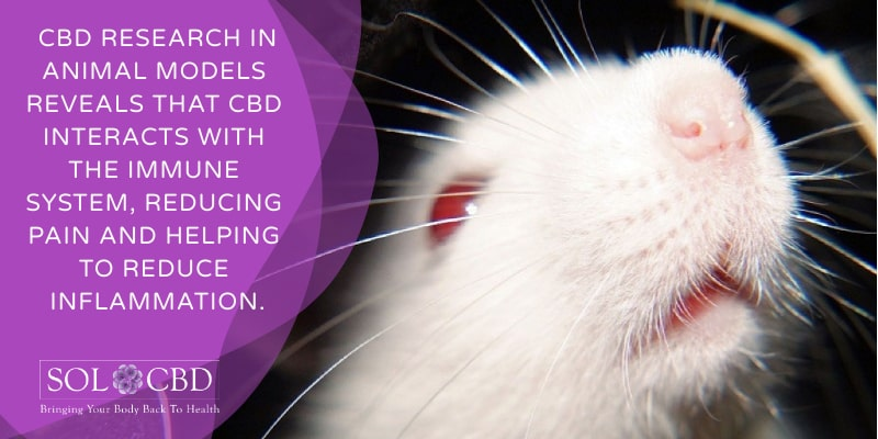 CBD research in animal models, which reveals that the cannabinoid interacts with the immune system, reducing pain in a range of conditions and helping to reduce inflammation.