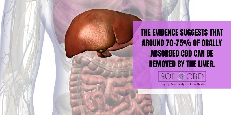 Evidence suggests that around 70–75% of orally absorbed CBD can be removed by the liver.