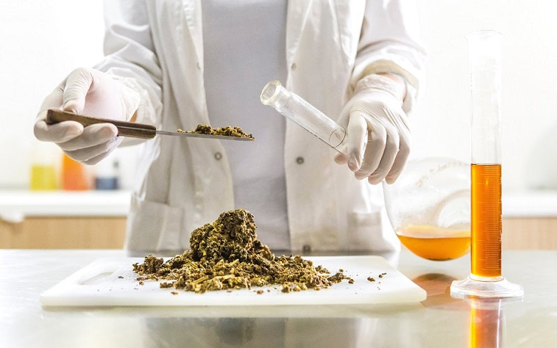 Is CBD Really Safe for Everyone?