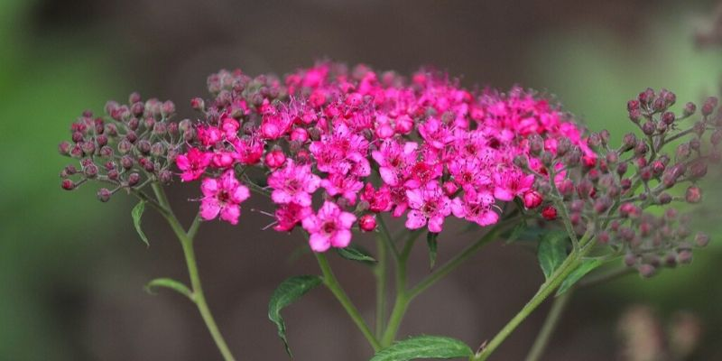 Valerian extract is most commonly used as a pharmaceutical alternative to treat sleep disorders, especially insomnia.