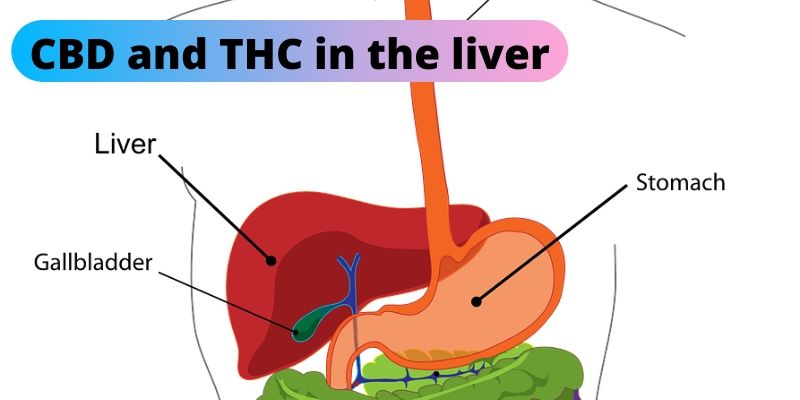Fatty liver disease is among the health concerns pertaining to glyphosate.