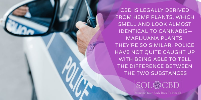 CBD is legally derived from hemp plants, which smell and look almost identical to cannabis—marijuana plants.