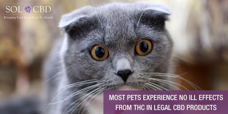 With legal CBD pet products, the THC content will be under 0.3%.