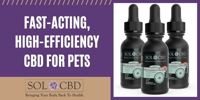 CBD offers plenty of potential benefits for pets.