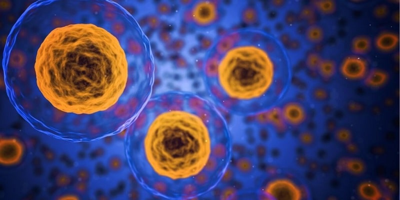 What are liposomes?